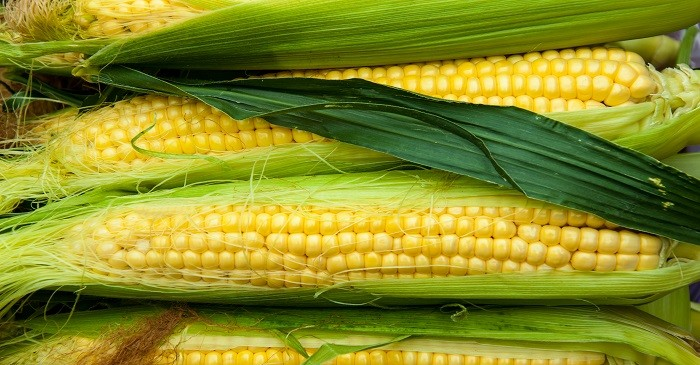 Mexico to import corn from Brazil to fulfil local demand