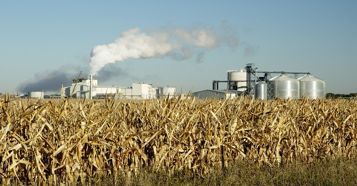 Corn - Changes in bio fuel regulations to impact US farmers