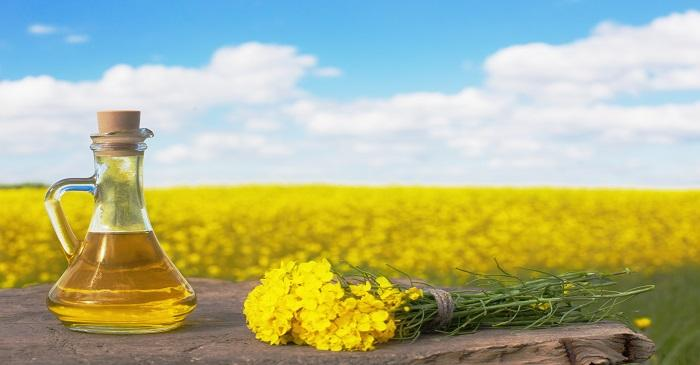 Canola oil gains due to low output