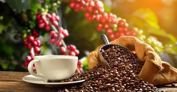 Coffee Arabica could be extinct in 60 years