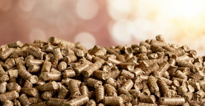 Biomass: Is It Renewable And Carbon Free?