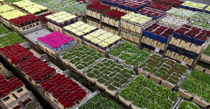 Flowers are prepared at a FloraHolland warehouse in Aalsmeer