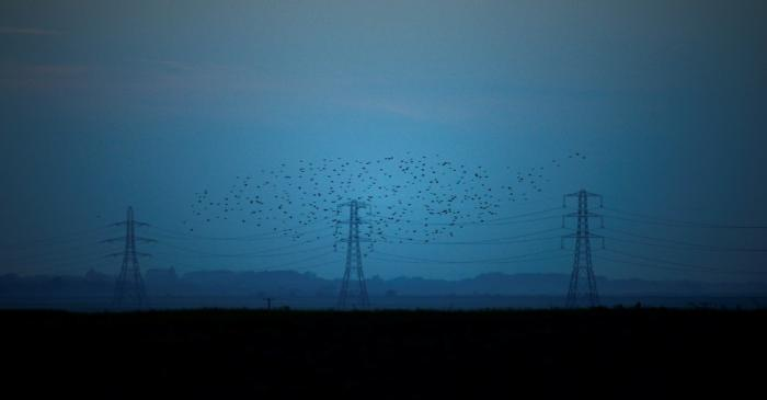 Migrating starlings fly at dusk past electricity pylons silhouetted by the sunset of a clear