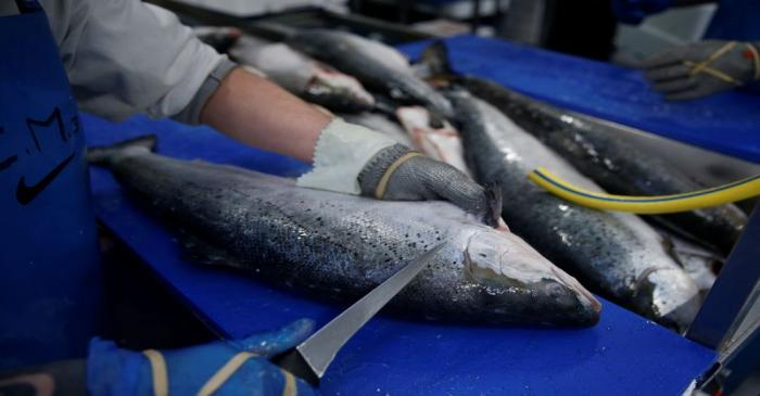 FILE PHOTO: A French worker fillets salmon in a fish processing plant in the port of