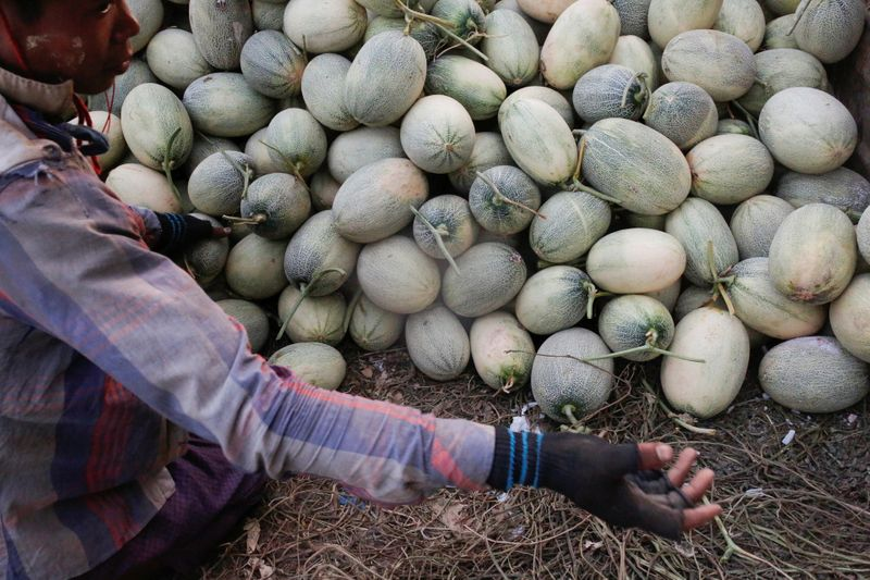 A worker transports melons for packing in Madauk, Bago