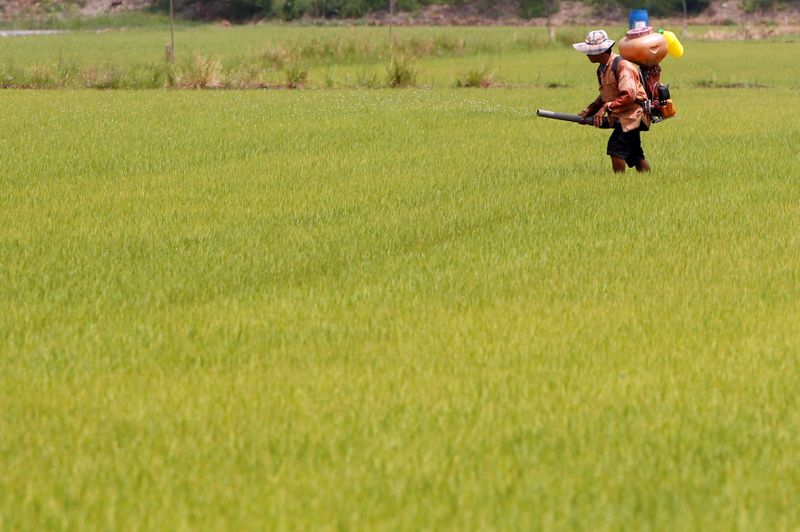 FILE PHOTO: A farmer sprays an unidentified pesticide over a rice field in Nonthaburi province